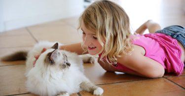 chat birman et enfant