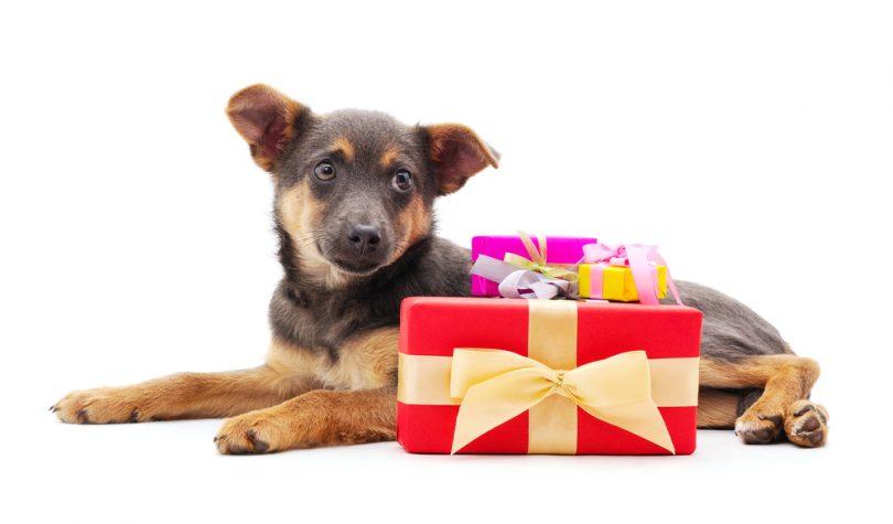 cadeau chien